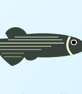 What about those zebrafishes?