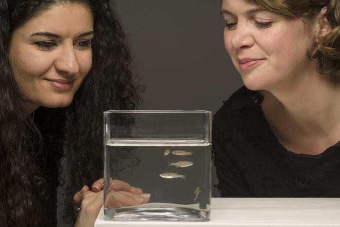 2 vrouwen kijken met hoop naar zebravissen.